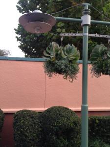 GrowIt Disney Blog 7