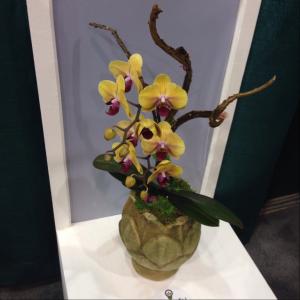 Orchid_GrowIt