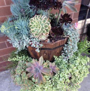 Succulent Pic2 GrowIt!