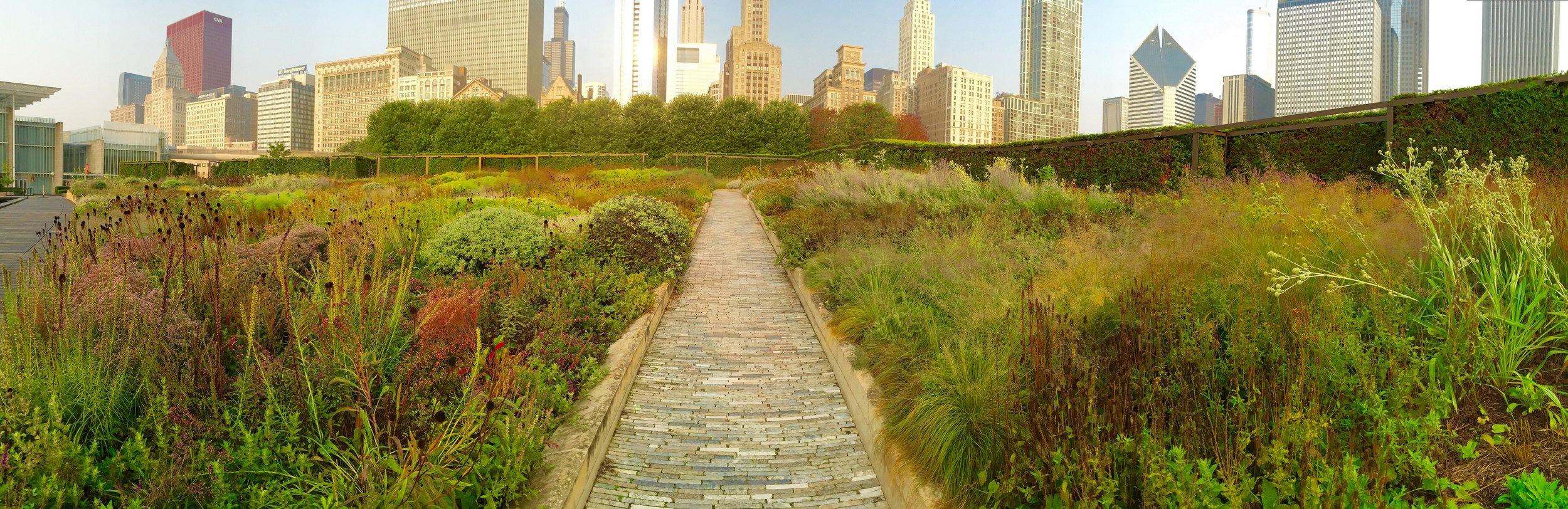 August at Lurie Garden