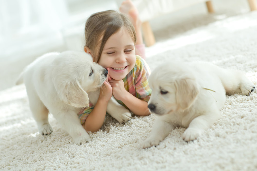 odor treatments - Extensive pet issues, odors and heavy smoke smell require more than routine cleaning. We are trained to help solve and eliminate such problems without toxic products. We use biodegradable products to help eliminate disposal issues.