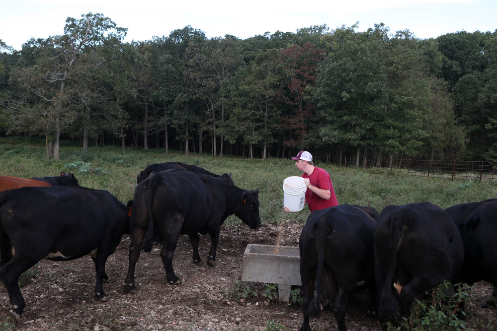 Feeding cattle is a regular task for Elias on the family farm where he has helped out since he was a child. Elias' dad Eric inherited a dairy farm from his father, but after stress of finances and endless work, Eric switched to raising beef a few years ago. Chores change from day to day, but feeding cattle each day is the most important duty.