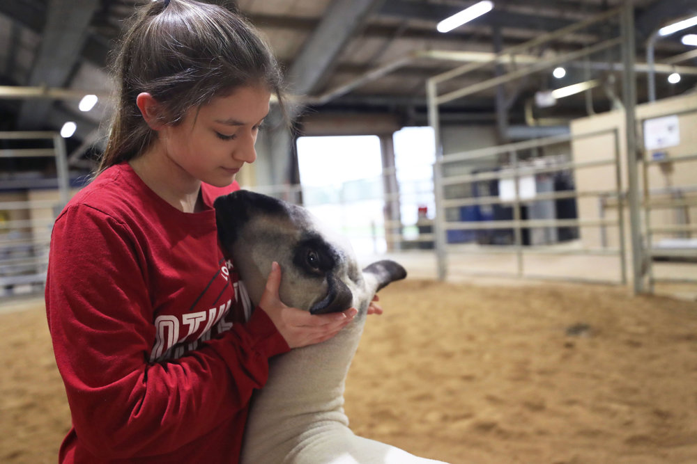 Morgan Perez holds Vader's face while practicing for the Junior Market Lamb Show in the practice arena at the Dickinson Agriculture Science Facility on Tuesday, Feb. 26, 2019. The show will be on Sunday, March 31 at the Galveston County Fair and Rodeo.