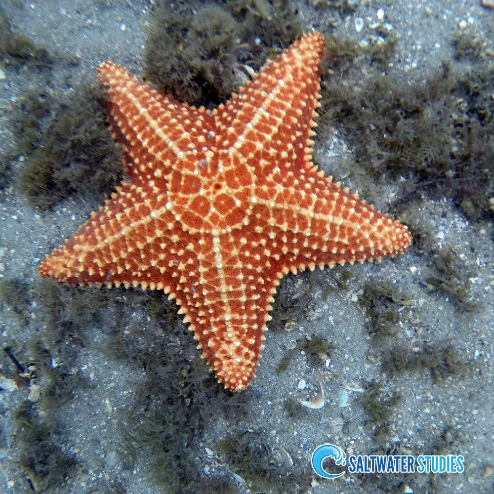 Instagram Pics - Cushion Sea Star.jpg