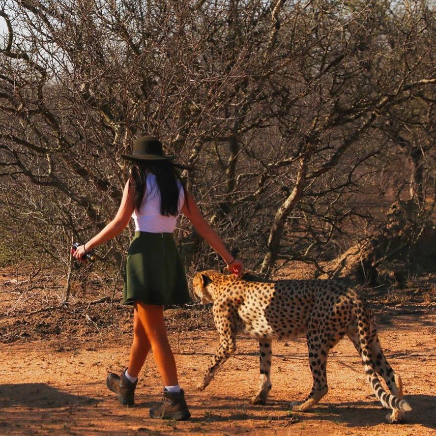 cheetah-south-africa