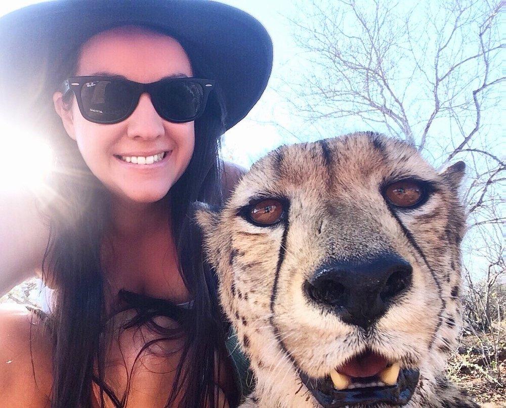 cheetah-south-africa-2