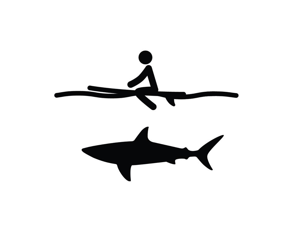 Australian guide to surfing with sharks