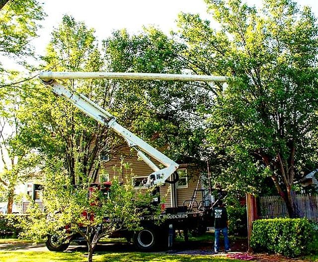 Tree Removal: Ten Reasons to Call an Arborist ~  http://www.joescompletetreeservice.com/blog/ ~  Trees benefit our environmentandcreate the character of any Long Island yard.  These characteristics make tree removal a difficult decision for the homeowner. ~  #joestreeservice #joescompletetreeservice #treeremoval #joestreeremival #longislandarborist #longislandtreeservice #joetree