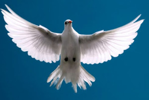 Souther Gospel is as peaceful as a Dove