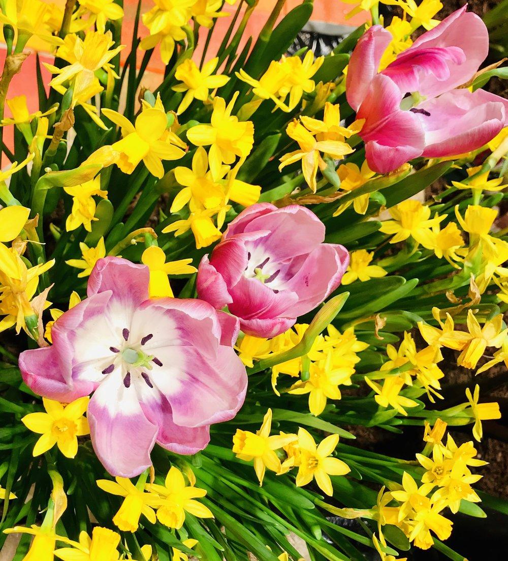 "©BetsyGibsonDesign ""Spring Has Sprung in Boston!"", Boston Flower and Garden Show, March 2019"