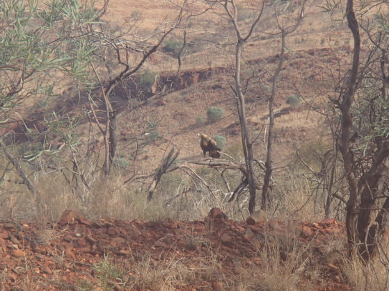 Holiday activities: Bird watching- we spotted an eagle