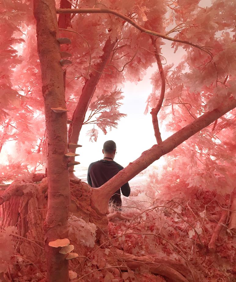 Work in Progress: Pink Forest, 2018