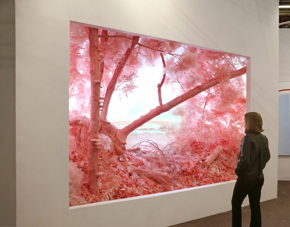 Pink Forest, 2018