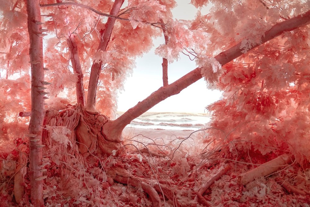 Detail: Pink Forest, 2018