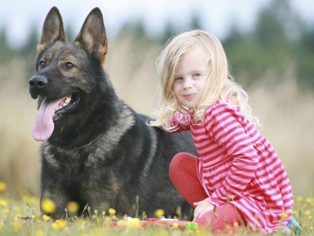 toddler-and-dog.jpg