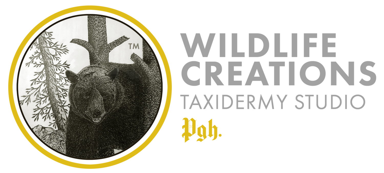 Wildlife Creations Taxidermy