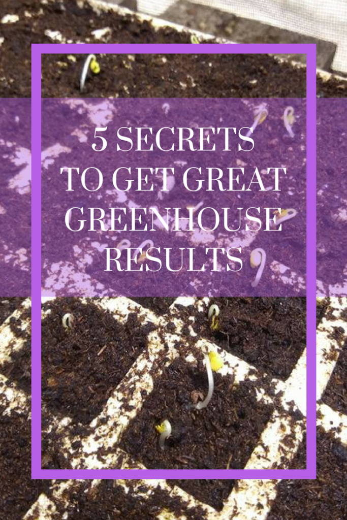 how to start vegetables from seed | starting seeds indoors | greenhouse | seeding trays | germinating | germination |  Read more !!