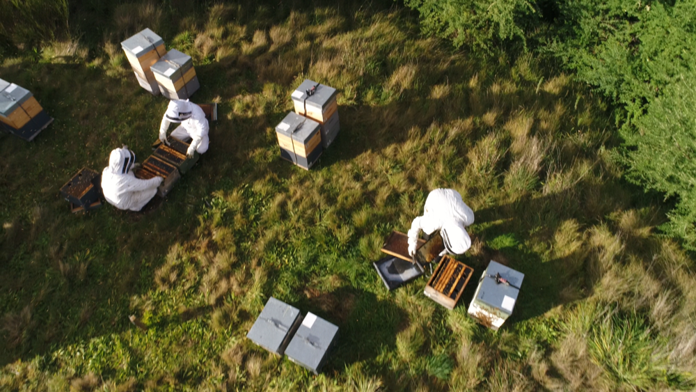 An apiary from the air