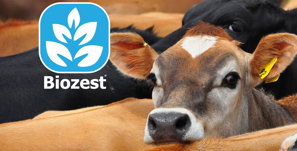 Biozest is scientifically proven to improve pasture growth and quality and to increase milk & meat production.
