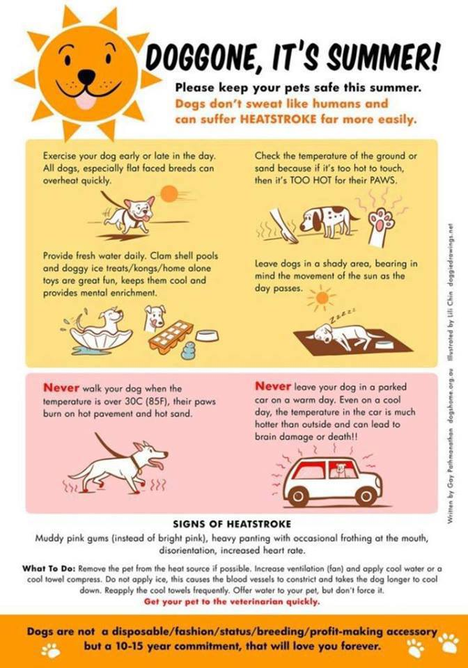 dog safety chart