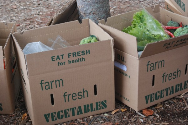 Farm-Fresh-Vegetables