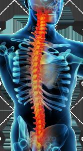 backpain_skeleton-165x300