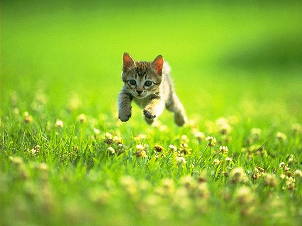 cute-kitten-631-4
