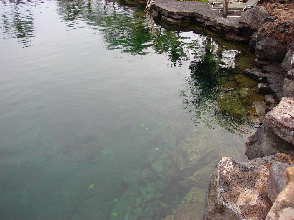 Hualalai March 13 Kings pond after 2 weeks.jpg