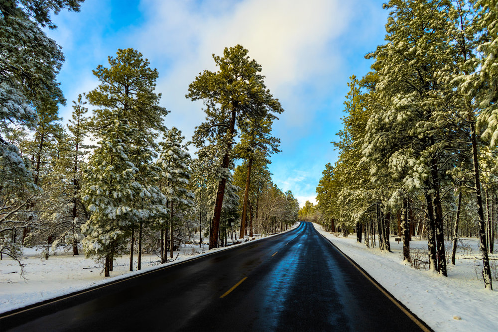 Grand Canyon Trees Road (Gallery Size).jpg