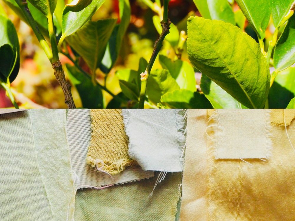 2019_What--Makes_Natural Dye Colours 4.jpg