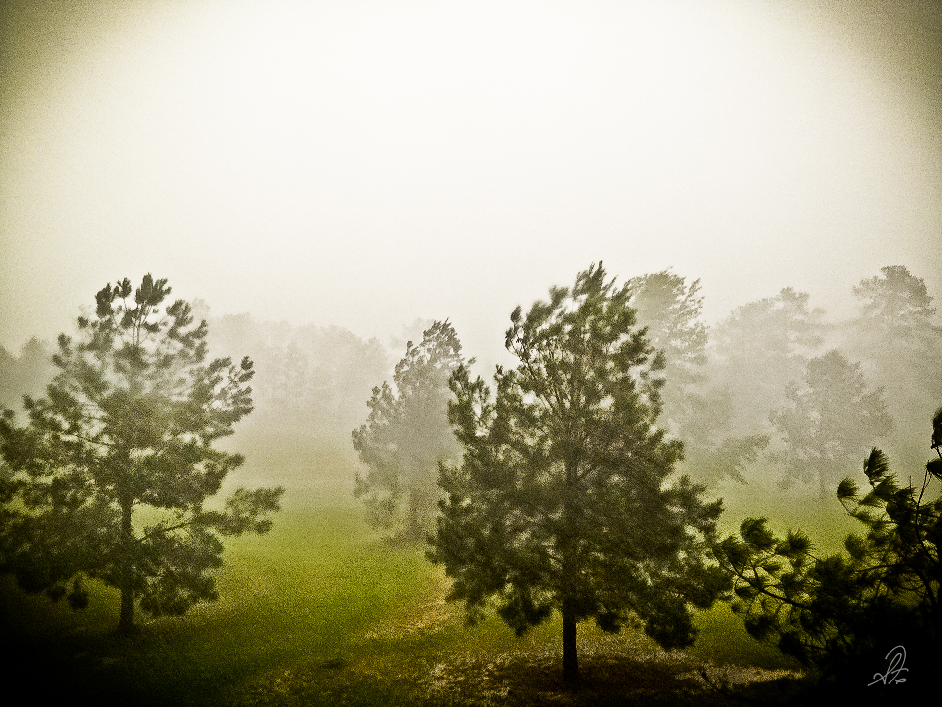 Project 365 [Day 167] Severe Thunderstorms Roll Across the Pasture