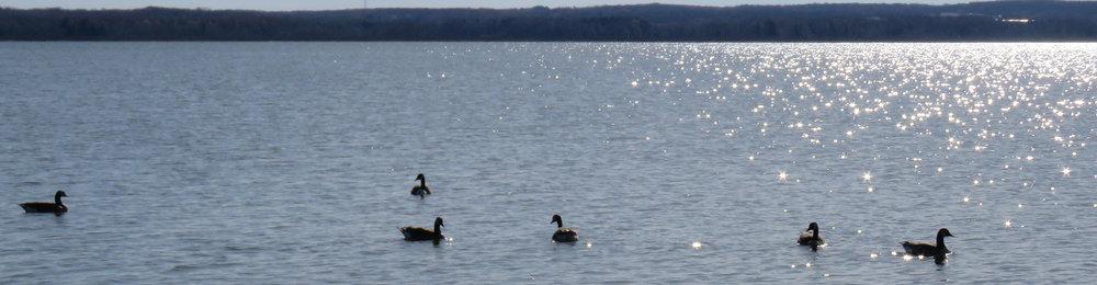 slides-spillway-ducks.jpg