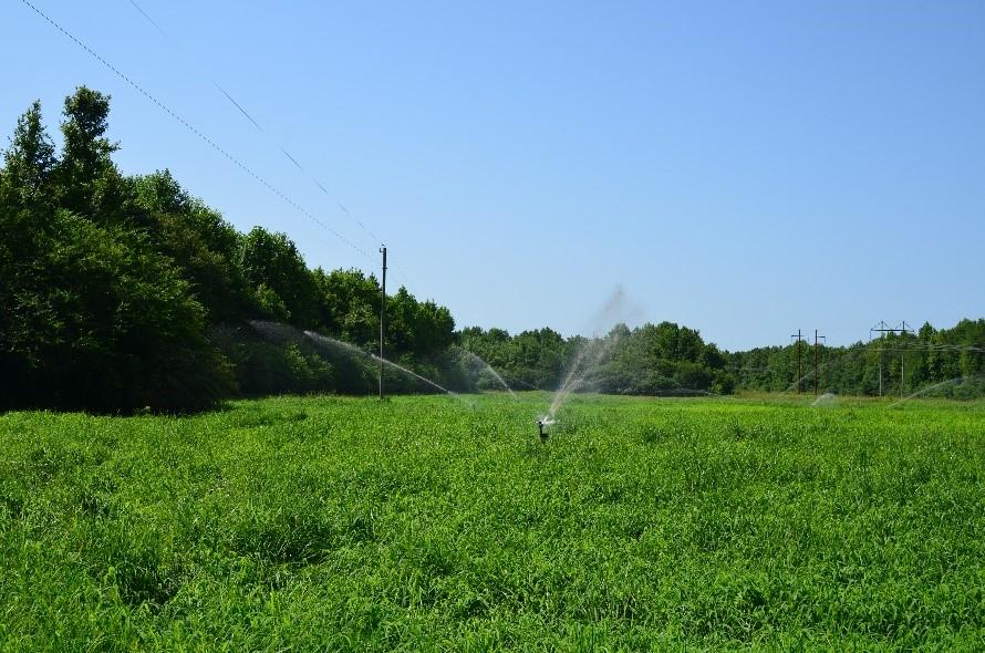 sppray