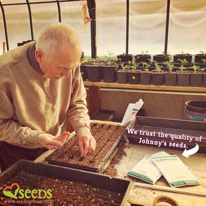 Flourishing Fungus Seeds Announcement Radish Wigglers — Seedy Saturday Gnats Sprouts amp;