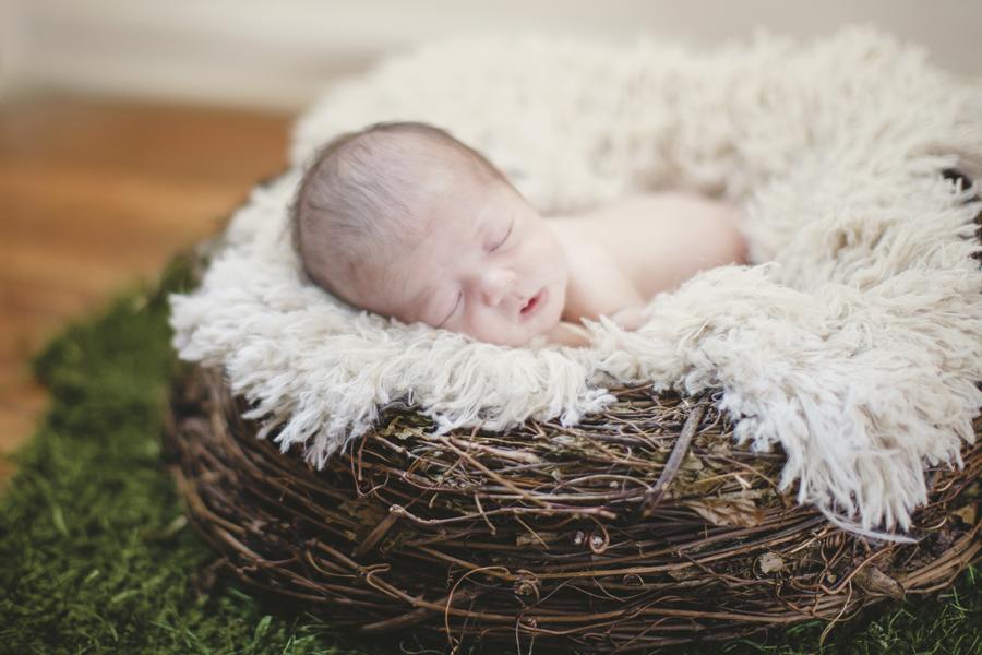 newborn prop nest