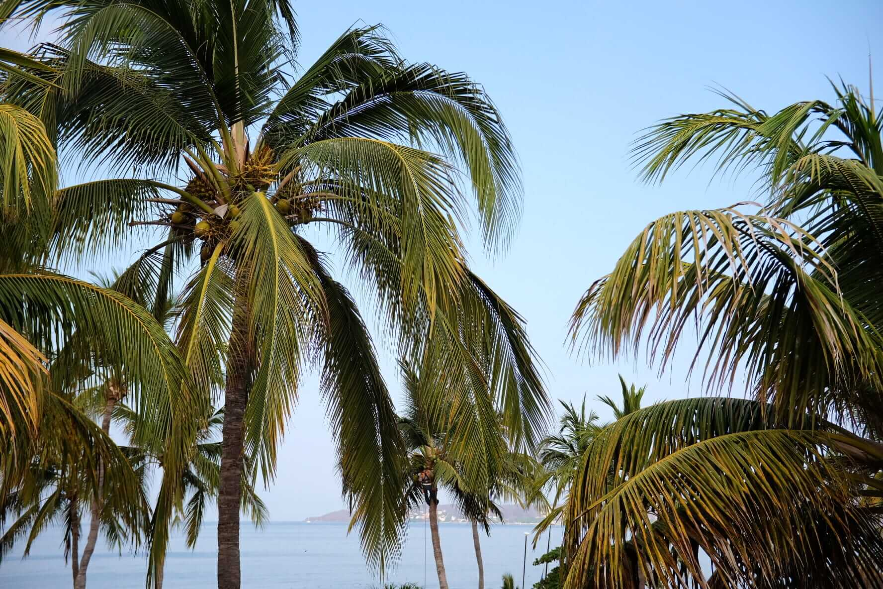 Man claiming the palm trees in Mexico