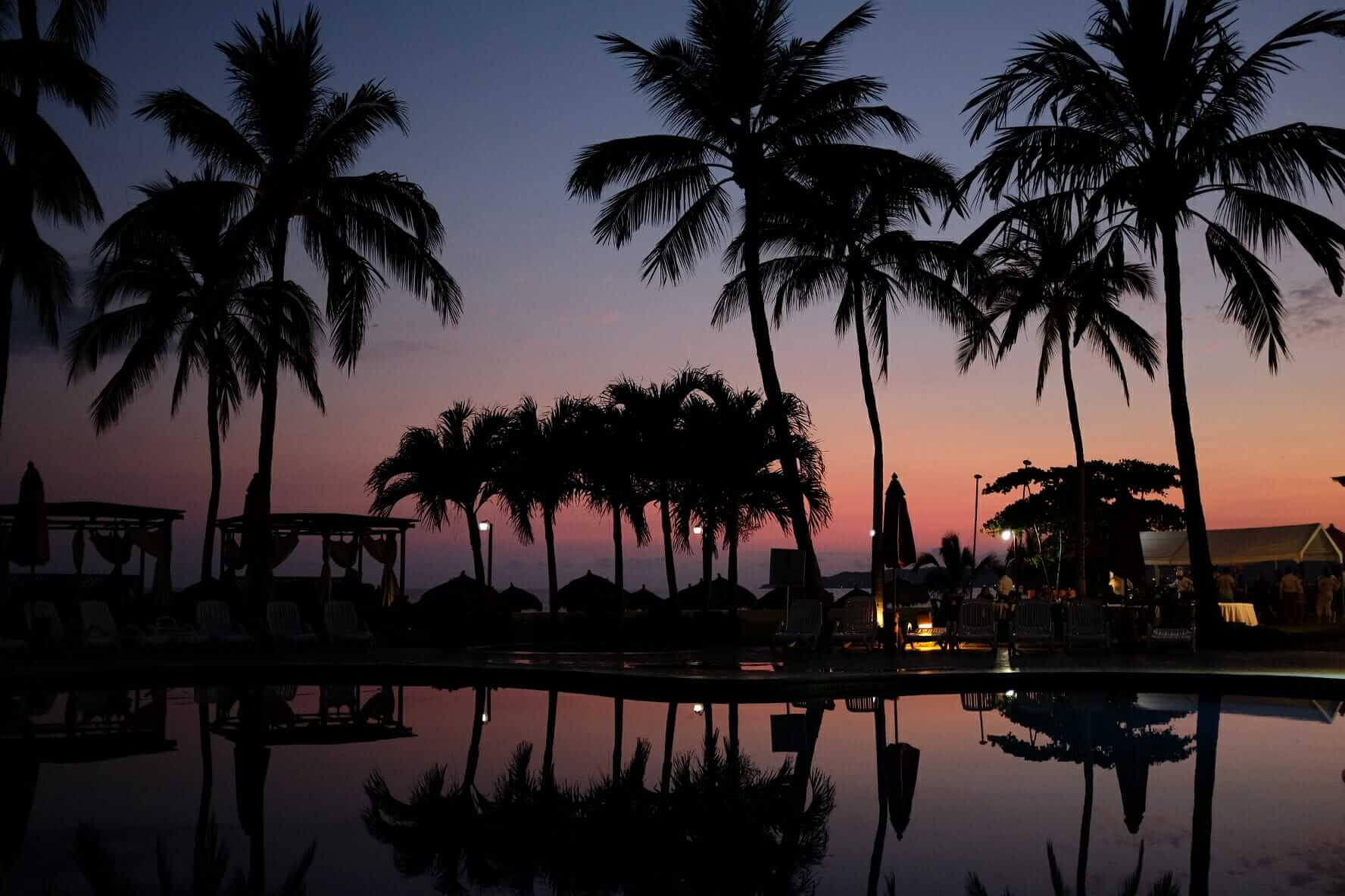 The Mexico sunset and palm trees
