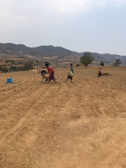 Farming in Shan State