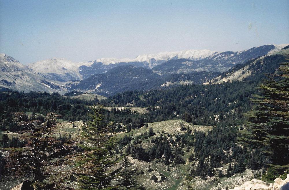 Image-8-Turkey-Cedar-Forest.-Ciglikara-National-Park-1.jpg