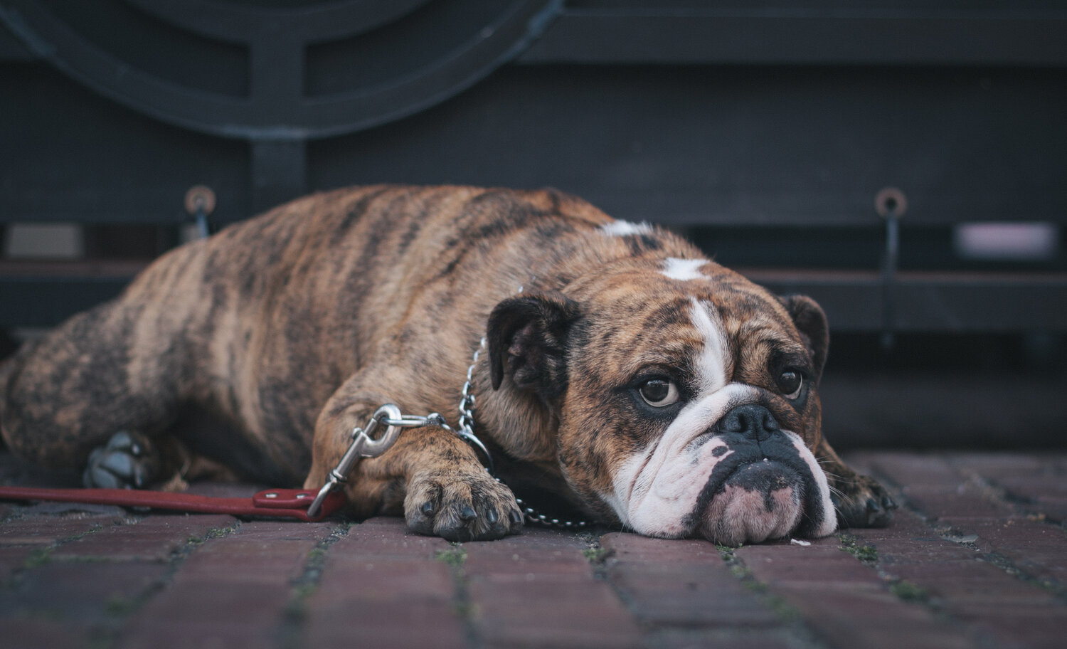 How To Help Your Dog With Separation Anxiety Auburn Valley
