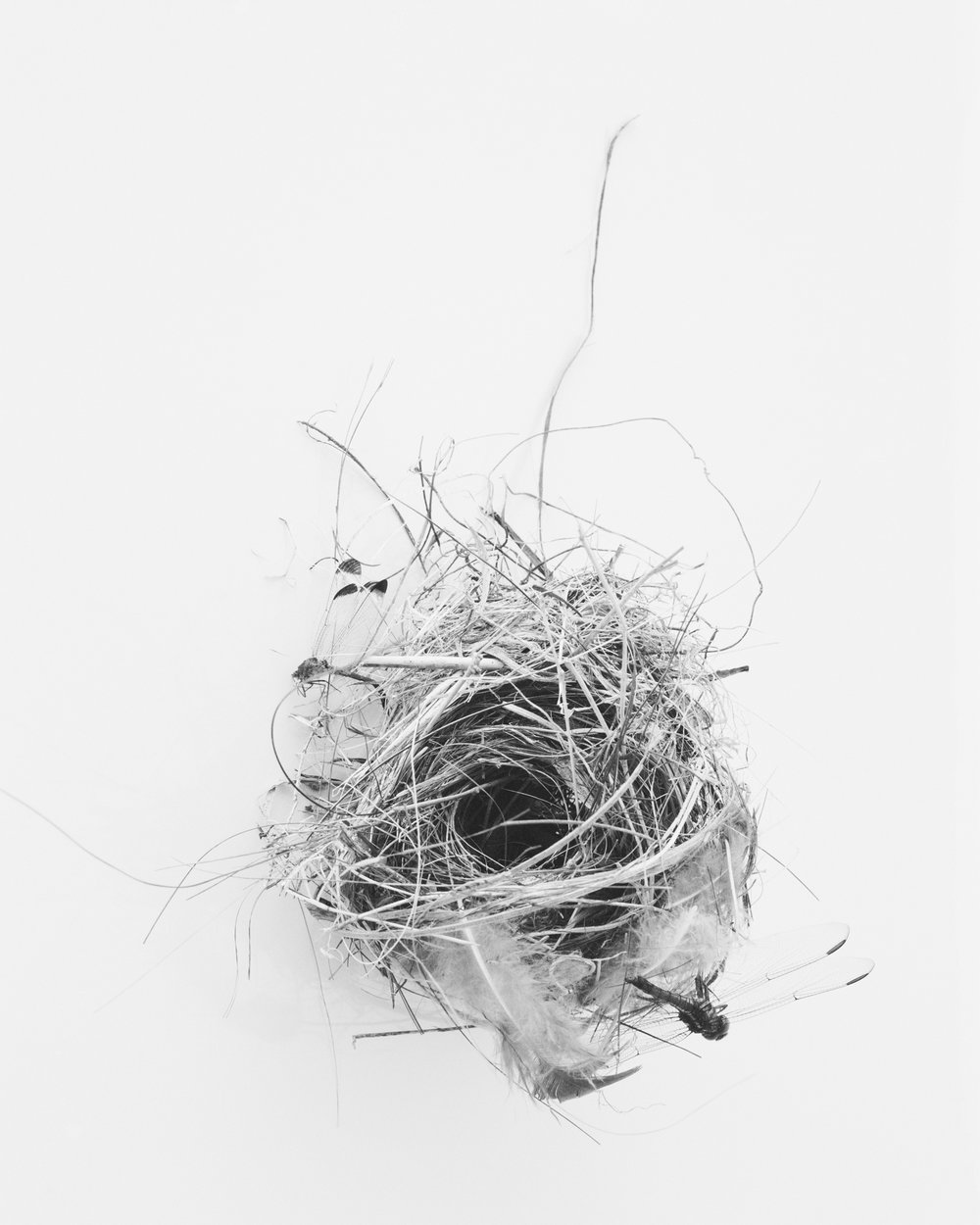Objects of interest: bird's nest with dragonfly, March, 2014, Itaparica, Brazil. 2014/2018