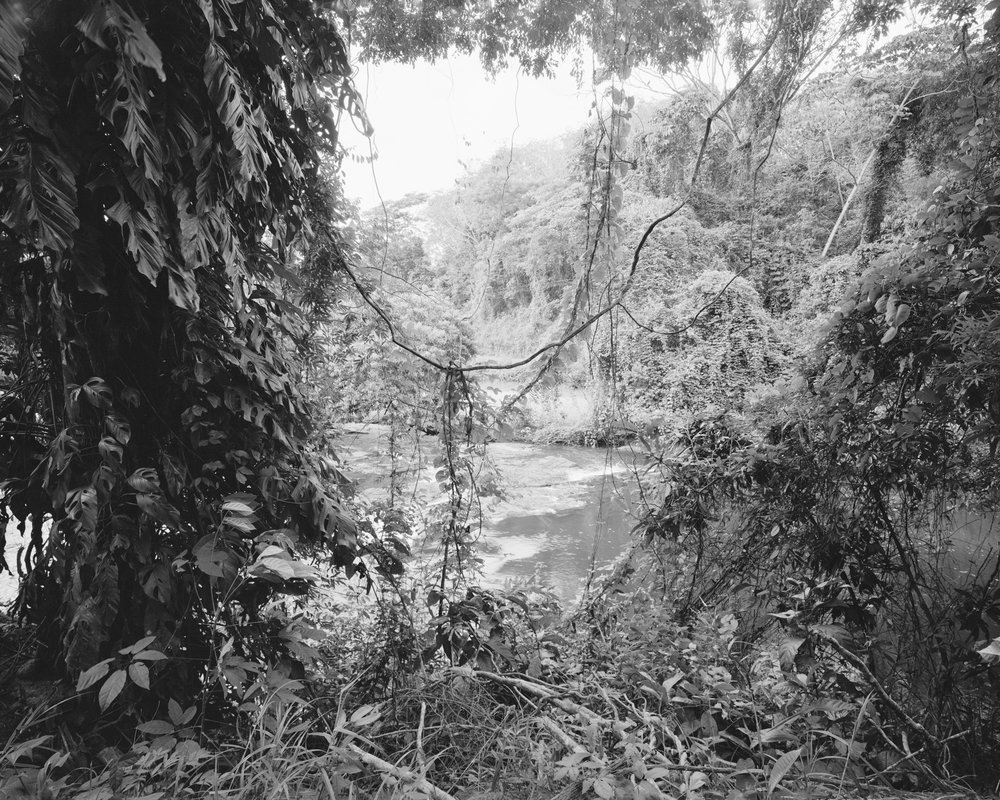Atlantic Forest No. 2 (Rio da Mariana), May, 2014, Bahia, Brazil. 2014/2018