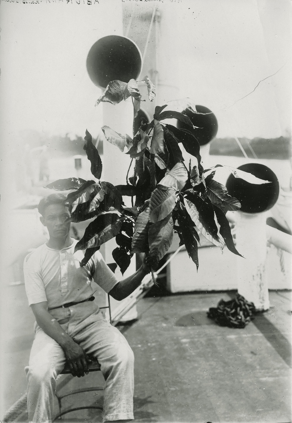 """(research image) Untitled, Amazon, Brazil, 1924. Typed on verso: """"Aburana leaves from near Rio Inauhiny on Purus River."""" 4.5 x 6"""" Gelatin silver fiber print. Creator: Cortland B. Manifold. Courtland Manifold Papers, Archival Services, University Libraries, The University of Akron, Akron, Ohio."""