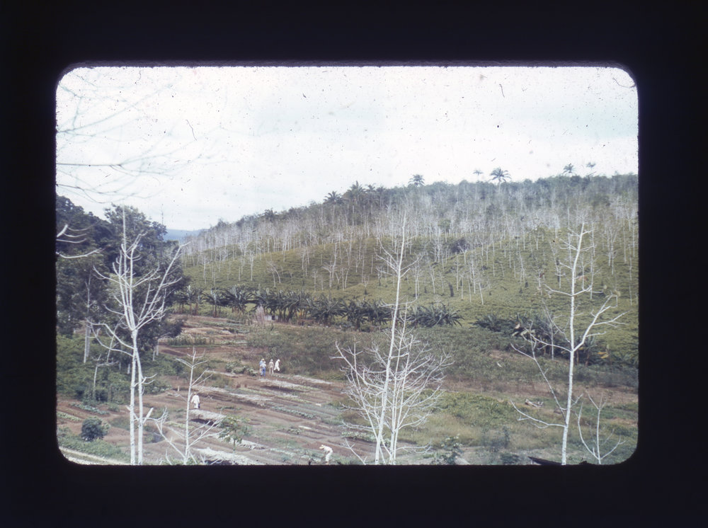 """(research image) Untitled. Typed on verso: """"Rubber – Ford 3. Fordlandia – view across vegetable garden"""" 35mm Kodachrome Slide. Creator: Cortland B. Manifold. Courtland Manifold Papers, Archival Services, University Libraries, The University of Akron, Akron, Ohio"""
