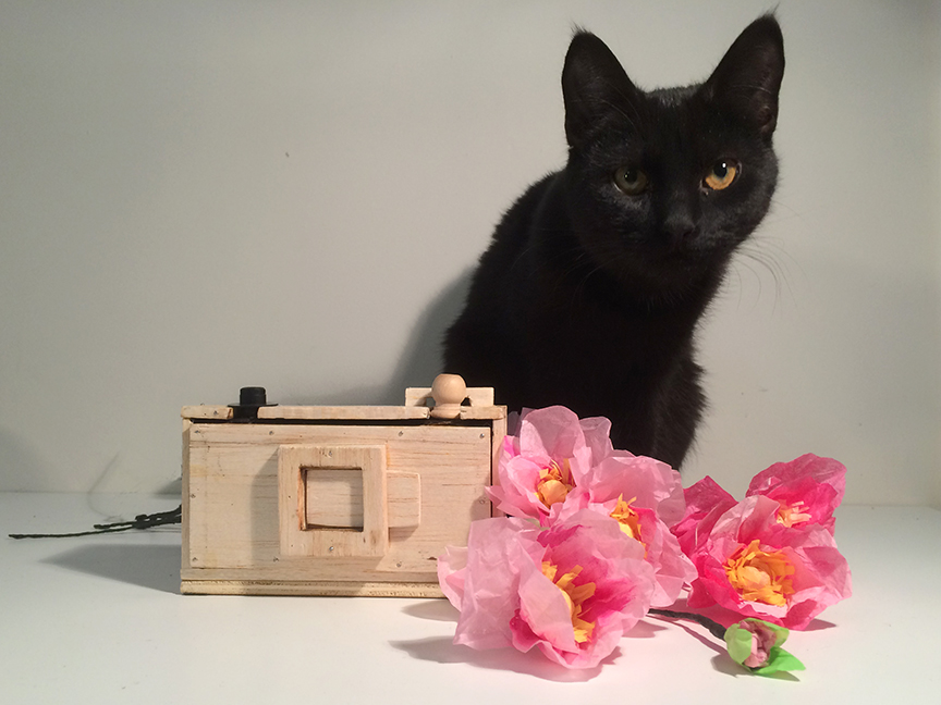 Influencer or blogger? Ella, a studio muse cat, is undecided. While she challenges you to the question, she'll sniff the paper flowers and wait for the definitive moment. Flowers and DIY pinhole camera by L.S. King.