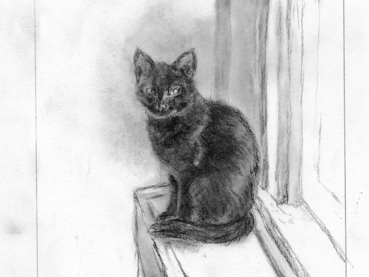 """A detail from """"Ella: Muse Cat #1"""" by L.S. King. Conté. Part of Drawingpalooza weekend. Finished goal is a drypoint etching."""