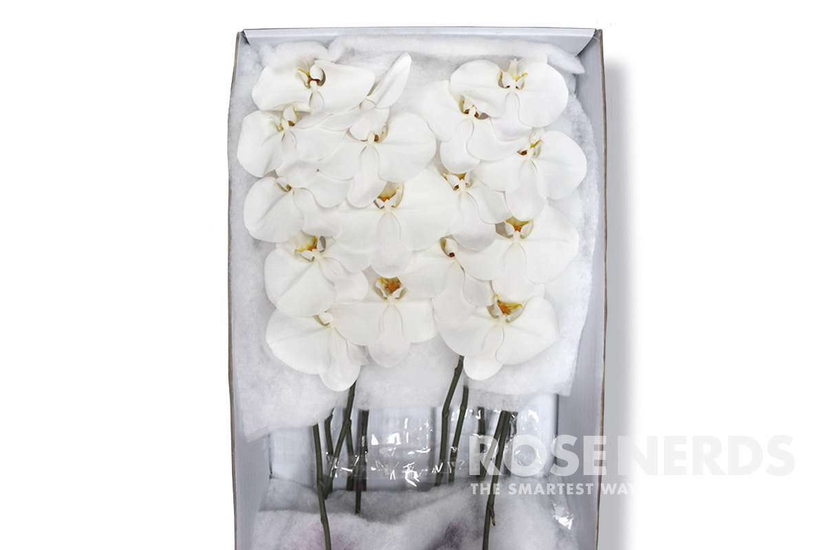 roseNerds_website_products_phals_white-Box
