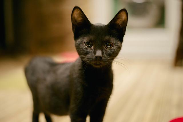Lady_Dinahs_Kittens_Mountolive.jpg