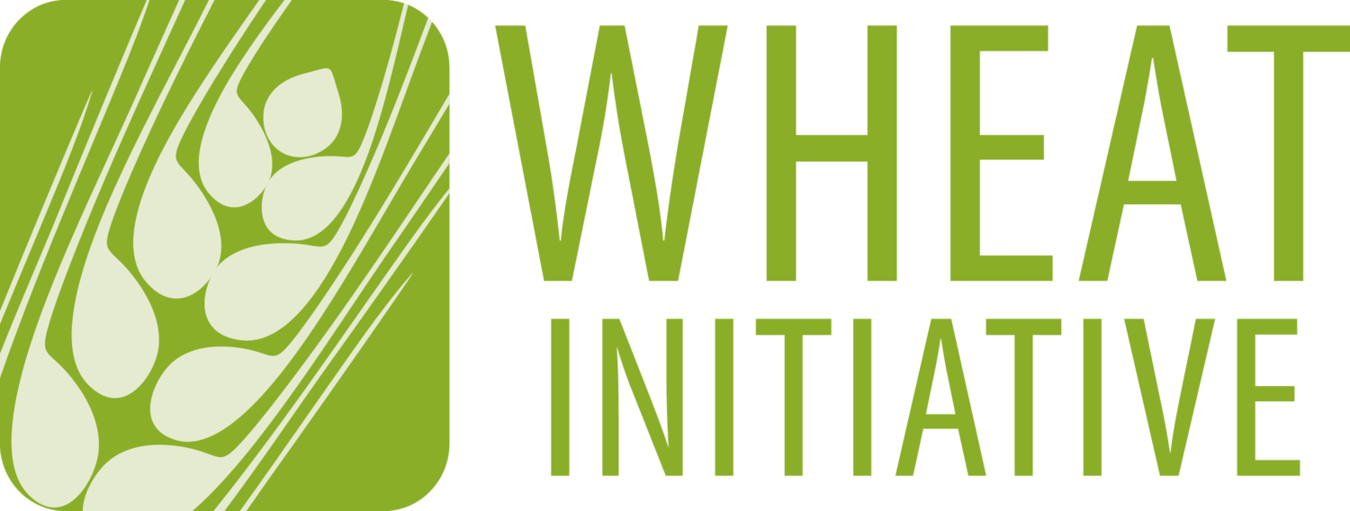 Wheat initiative