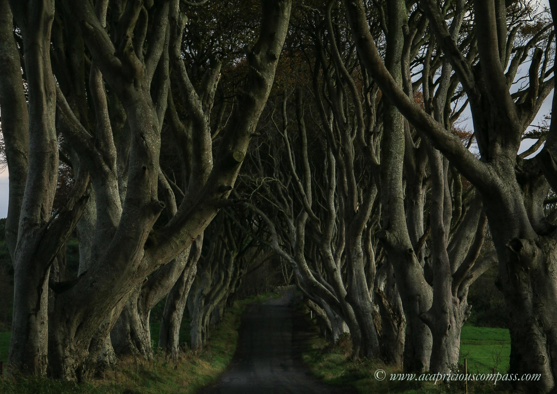 5 day itinerary causeway coastal route dark hedges